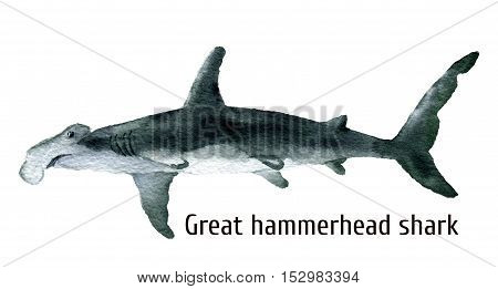 Watercolor Great hammerhead shark. Illustration isolated on white background. For design, prints, background, t-shirt.