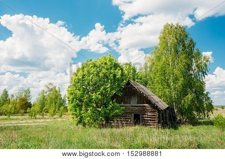 The Abandoned Small Wooden Country Blockhouse In Exclusion Area After Chernobyl Catastrophe Against The Background Of Scenic Rural Summer Green Landscape With Blue Cloudy Sky.
