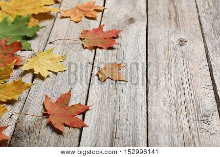 Autumn Leafs On Grey Wooden Table