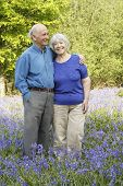 Senior couple in woodland full of beautiful springtime bluebells. poster