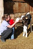 Young mother teaching her daughter how to bottle feed milk to a holstein calf at a farm. poster