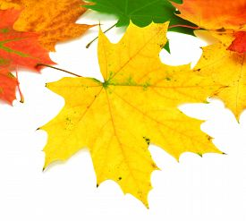 Autumn card of maple leaves. Flat. Autumn.