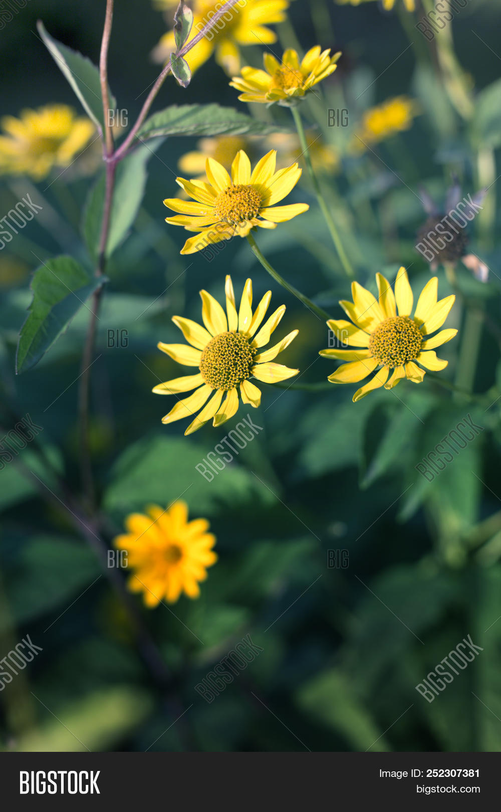 Sunny yellow flowers image photo free trial bigstock sunny yellow flowers background cute yellow summer flowerlicate yellow flower fragile delicate mightylinksfo