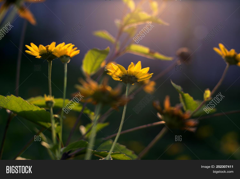 Sunny Yellow Flowers Image Photo Free Trial Bigstock