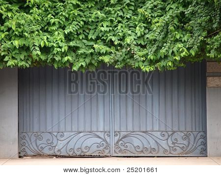 Old Door Covered By Foliage