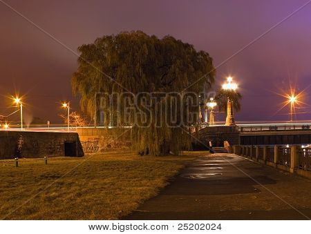 Tree In Night City