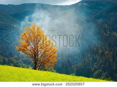 Tree With Golden Foliage On Grassy Hillside In Smoke. Beautiful Autumn Scenery In Mountains