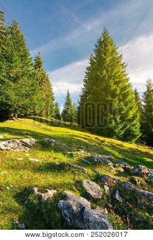 Rocks Among The Grassy Glade In Forest. Lovely Nature Background
