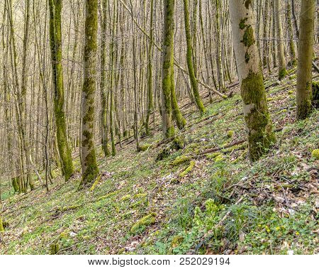 Hillside Forest Scenery At Spring Time In Southern Germany