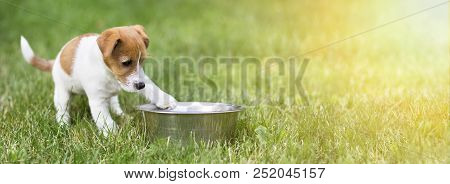 Hungry Dog Puppy Waiting For His Food - Web Banner With Copy Space