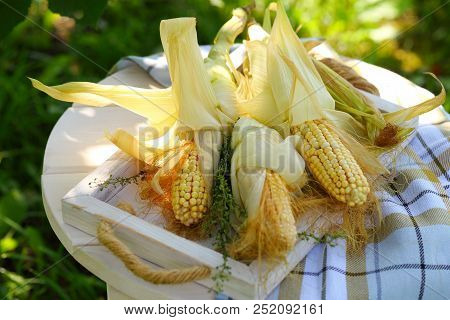 Peeled Corn On A White Table In The Garden