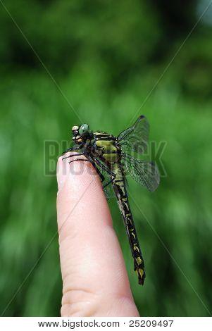Libelle sitzt auf einem finger