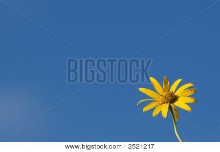 Lone Flower