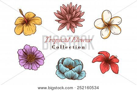 Vector Illustration Of Tropical Flowers In Sketch Style For Design, Website, Background, Banner. Tro