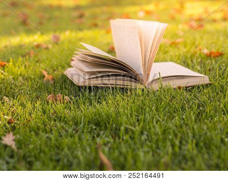 Reading A Book In The Sunlight On The Green Grass Between Foliage. Nice Place. Season, Education, De