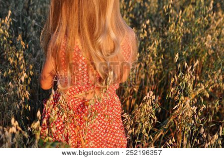 Girl With Curly Long Hair In A Red Dress Walking On The Field With Oats At Sunset. Summer. Vintage.