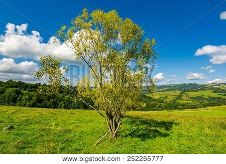 Orchard On The Grassy Hill. Beautiful Countryside In Fine Weather With Fluffy Clouds On The Blue Sky
