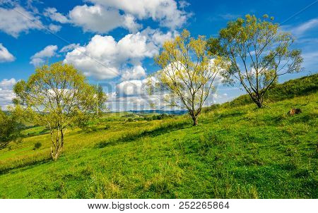 Row Of Trees On The Grassy Slope. Warm Autumn Weather With Beautiful Sky