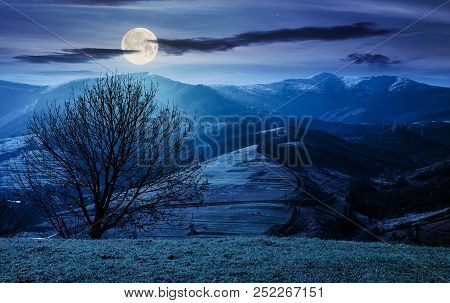 Naked Tree On The Grassy Hill At Night In Full Moon Light. Mountain Ridge With Snowy Tops In The Dis
