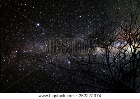 Galaxy Back Silhouette Dry Branch Tree And Night Sky