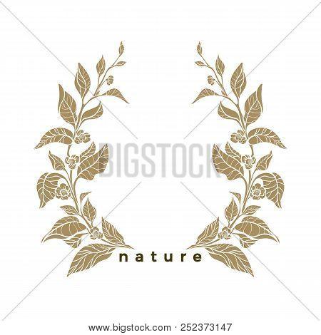 Vector Vintage Pattern Of Tea Tree, Bush, Branch, Leaf, Flower. Organic Template, Nature Drink, Food