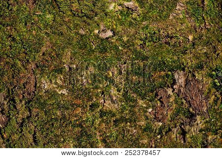 Green Moss Texture On The Tree's Crust