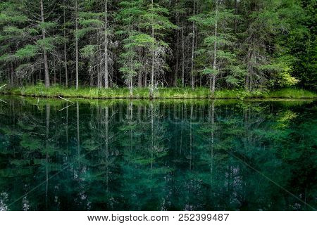 Forest Nature Background. Pine Tree Forest Reflection In The Pristine Clear Waters Of The Northern M