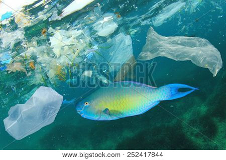 Plastic bags pollute sea and contaminate fish