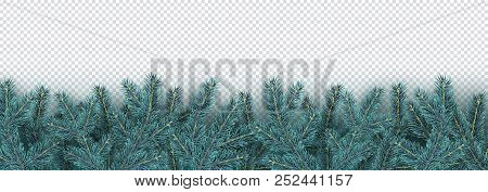 christmas new year winter border with realistic branches of christmas tree xmas element minimal