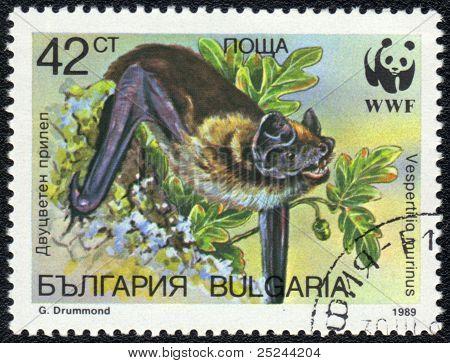 Particoloured Bat