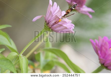 This Is An Image Of A Pink Flower With A Butterfly On It