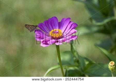 This Is An Image Of A Purple Flower With A Butterfly On It