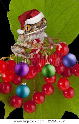 Christmas Frog On Berry Ornaments