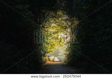 Path Through A Dark Forest With A Light At The End Of The Forest