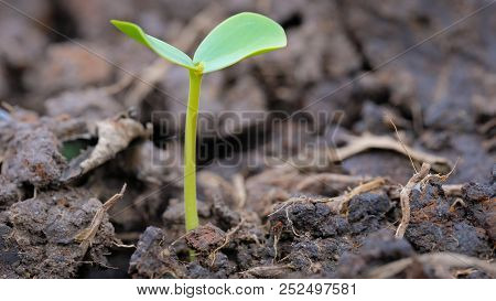 Agriculture and seedling tree concept with macro photo of seedling tree. Royalty high quality free s
