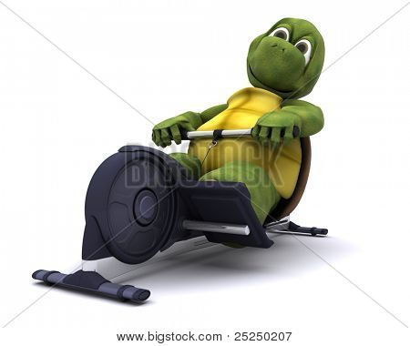 3d render of a tortoise training on a rowing machine