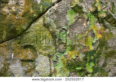 Close Up Green Moss Texture , Background, Nature Plant, Moss Wall