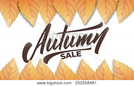 Autumn Sale. Autumn Background Layout With Fall Leves And Hand Lettering. Fall Sale, Promotion, Bann