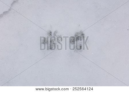 Pawprints In The Snow, England, Uk, Western Europe.