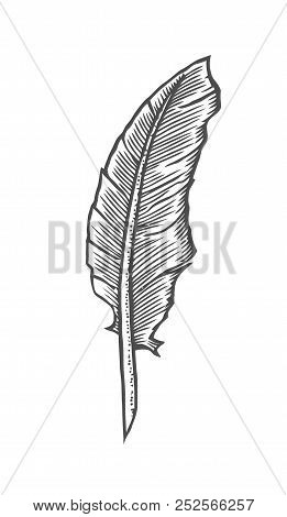 Feather Quill Pen In A Vintage Woodblock Style