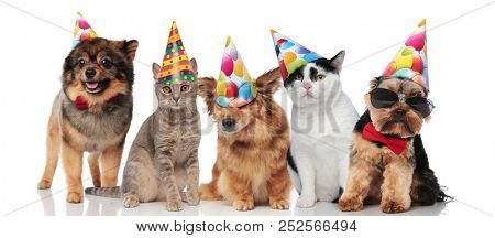 five cute party pets with colorful caps standing and sitting on white background