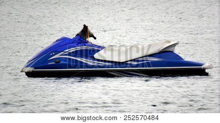 Jetski Aquabike Hydrocicle Floating On Sea Background