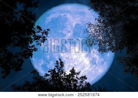 Full Moon Back Silhouette Between Top Branch Tree Night Sky