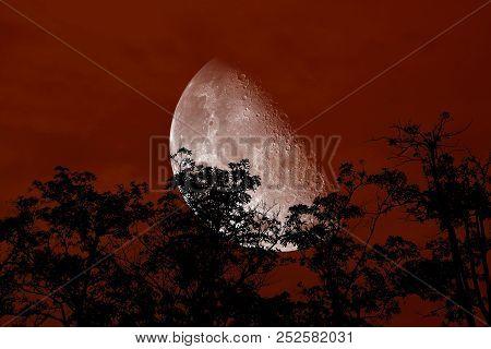 Half Moon Back Silhouette Branch Tree Night Red Sky