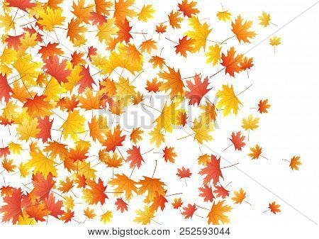 Red Maple Leaves Background Seasonal Vector Illustration. Fall Season Specific Vector Background. Au