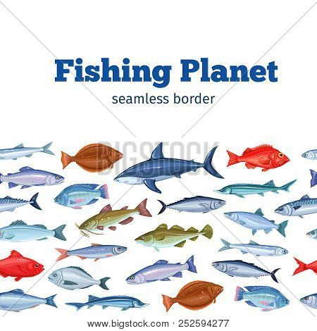 Seamleess Border Fish. Seafood Background With Bream, Mackerel, Tunny Or Sterlet, Codfish And Halibu