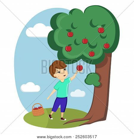 A Boy Collects Apples From A Tree. Nature, Village, Farm. Ecological Useful Products