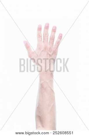 Man Arm With Blood Vain Pattern Isolated On White Background, Raise Arm Up For Vote, Show Hand Sign