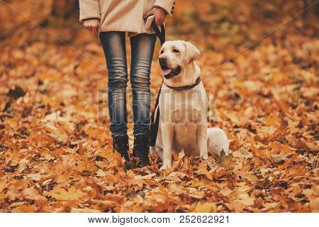 Woman And Labrador In Autumn Park. Retriever In Park. Walking With Dog. Pets And People. Best Friend