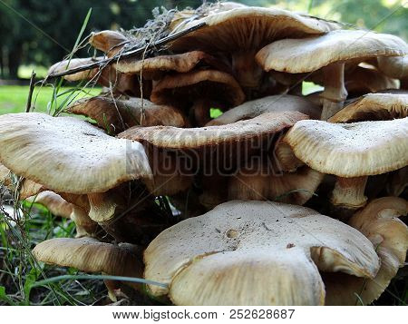 Beautiful Mushrooms Sprout From The Autumn Floor, Geismar, Edersee, Hesse